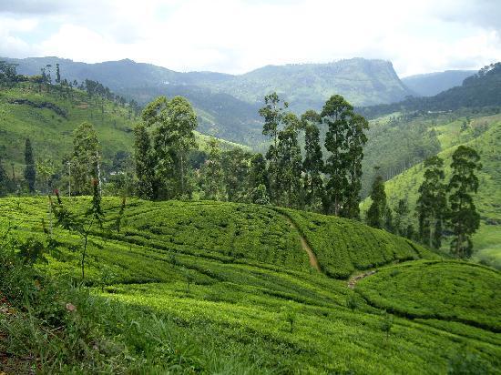 Tourist Attractions In Sri Lanka Travel Wide World