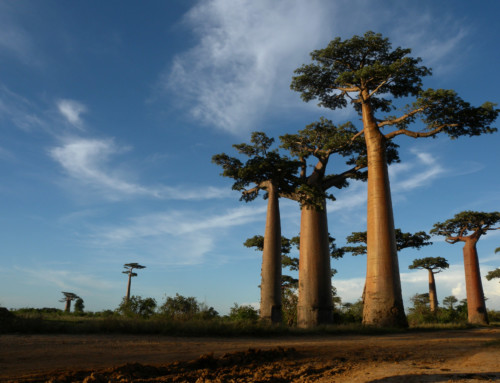 The Magical Island of Madagascar