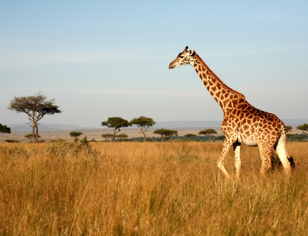 Must See Places in Nairobi – Let the Safari Capital of Africa Charm You