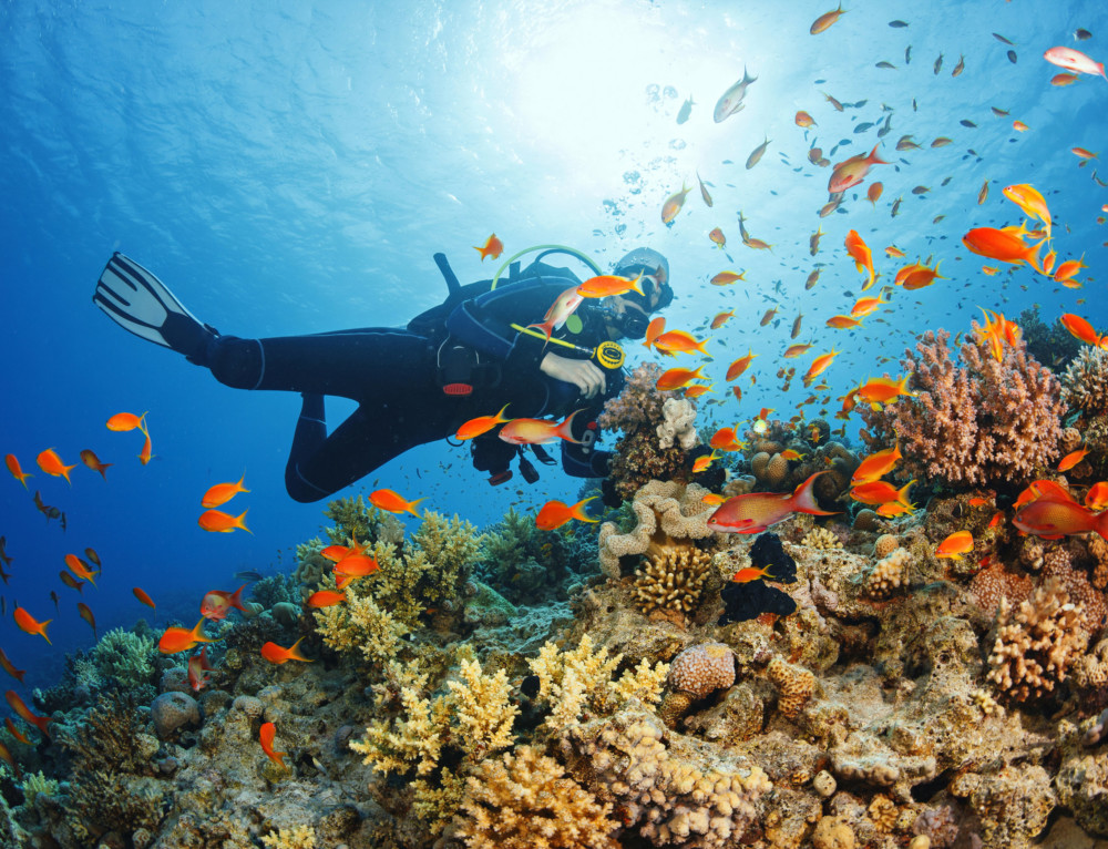 Best Diving Destinations in the World – Take the Plunge